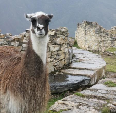 Schwer am Ringen: Von Chachapoyas zur Ruine Kuelap