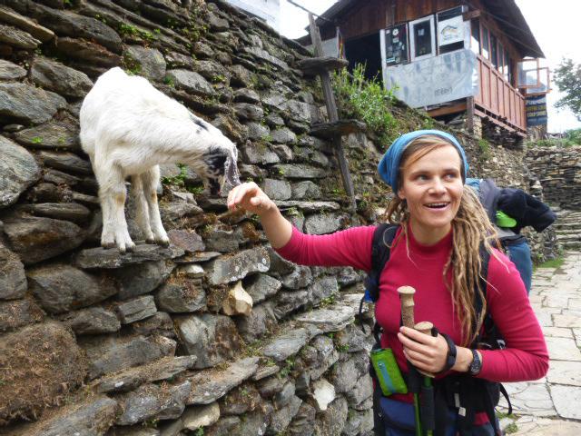 Annapurna Circuit. Jana und die Ziege.