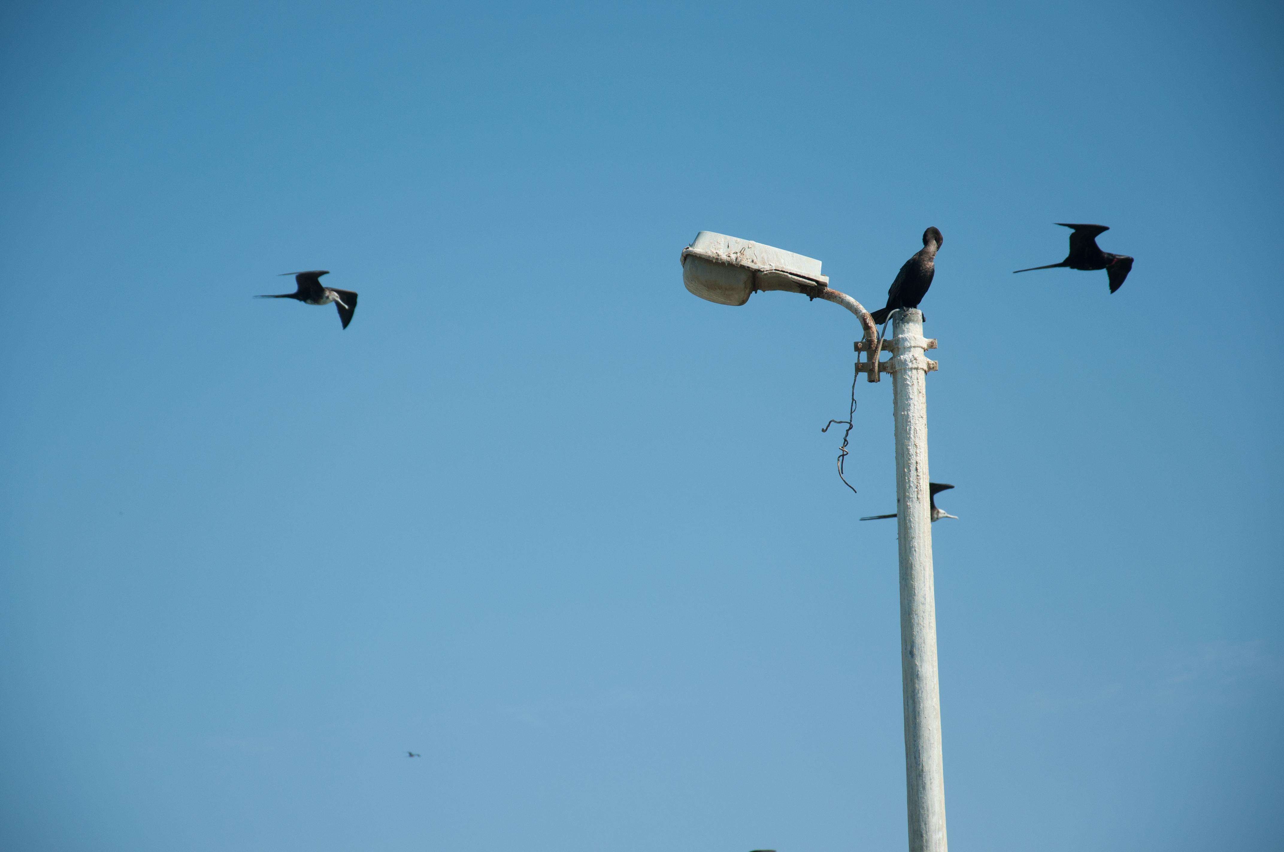 Vögel auf der Laterne