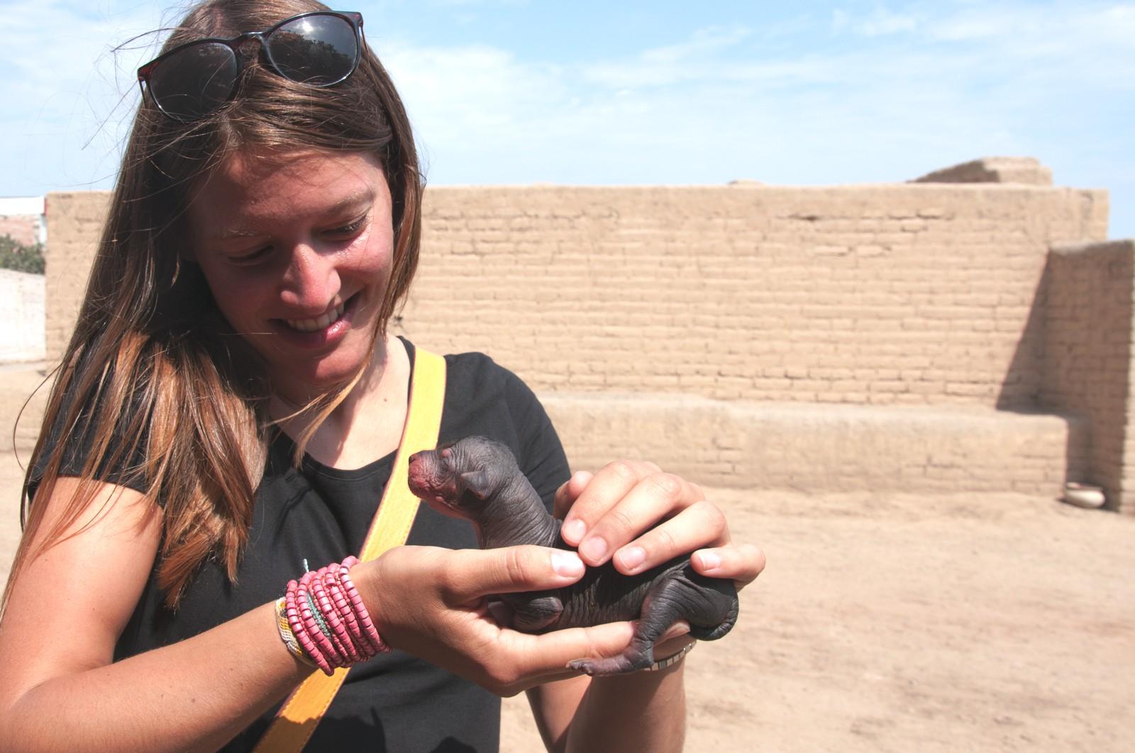Welpe peruanischer Nackthund