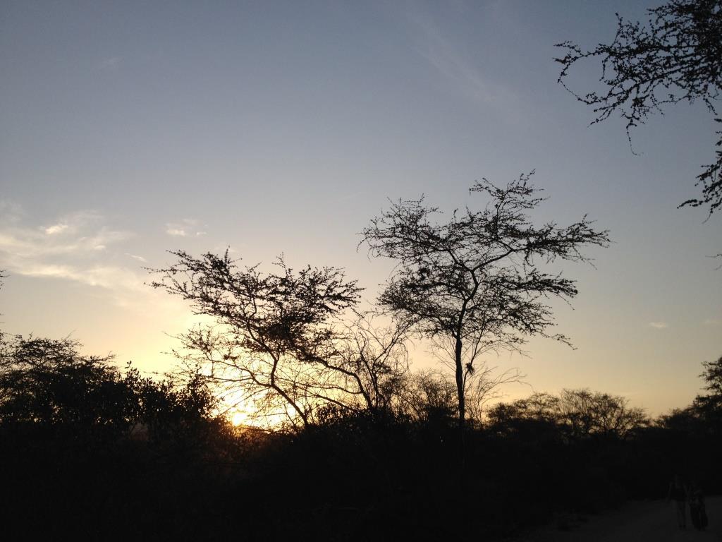 Bosque de Pomac